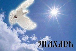 Свет и голубь