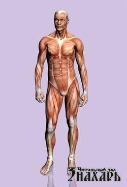 Секреты человеческого тела